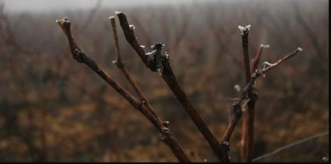 Vin & Biodynamie/ L'autre culture des vins vivants - Le Nouvel Observateur | Hôtellerie -restauration | Scoop.it