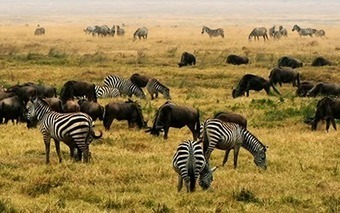 Why Biodiversity is Important in Africa? | Development in Africa | Scoop.it