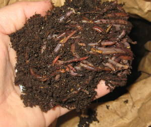 Why Should An Herb Gardener Care About Worm Bins? | Annie Haven | Haven Brand | Scoop.it