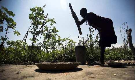 La transformation de l'agriculture comme remède aux pays les plus pauvres | Questions de développement ... | Scoop.it