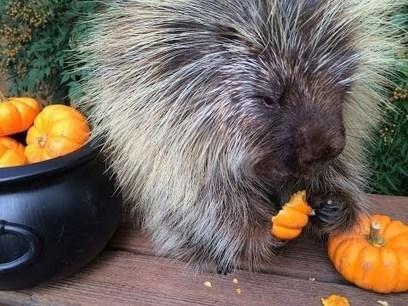 How to Recycle Halloween Pumpkins for Wildlife   Cucurbitaceae   Scoop.it