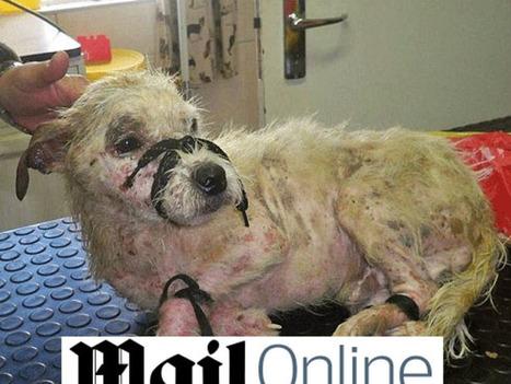 Un chien retrouvé ligoté dans un sac plastique, sur un chemin de fer | CaniCatNews-actualité | Scoop.it