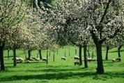 Des ressources en ligne : Uved : Focus n°5 - L'agriculture durable   AGRONOMIE VEGETAL   Scoop.it