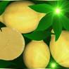 Limón ( Citrus x Limon )