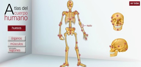 Atlas de anatomía humana. | EDUDIARI 2.0 DE jluisbloc | Scoop.it