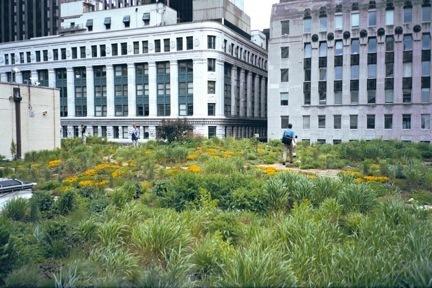Les différents types de Toits végétalisés | biodiversité en milieu urbain | Scoop.it