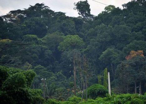 Menaces sur le climat: 200 000 ha de forêt disparaissent par an en Côte d'Ivoire | Mes passions natures | Scoop.it