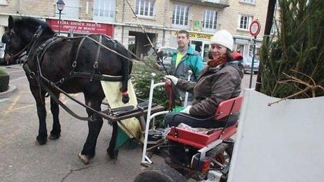 Voltige, un cheval ramasseur de sapins - Ouest-France | Equidés | Scoop.it