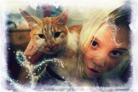 X-Pro1 & A Cat's Life ~ By PeterPrism | X-Pro1 & PeterPrism | Scoop.it