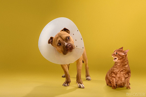 Portraits of Dogs Wearing the Cone of Shame | What about? What's up? Qué pasa? | Scoop.it