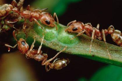 Les fourmis sont contaminées par les phtalates | Toxique, soyons vigilant ! | Scoop.it
