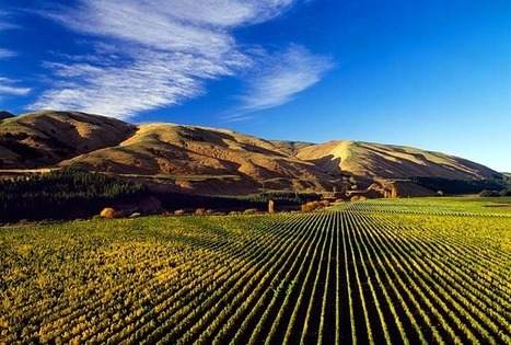 Martinborough: A gold-medal microclimate | Vitabella Wine Daily Gossip | Scoop.it