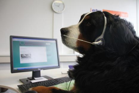 Blog Robin Hood Tierheimservice | Robin Hood Tierheimservice Social Media | Scoop.it
