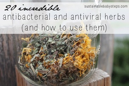 20 Antibacterial and Antiviral Herbs and How to Use Them - Sustainable Baby Steps | Kate's Topics | Scoop.it