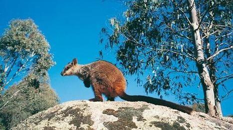 Wildlife Land Trust on Twitter | GarryRogers NatCon News | Scoop.it