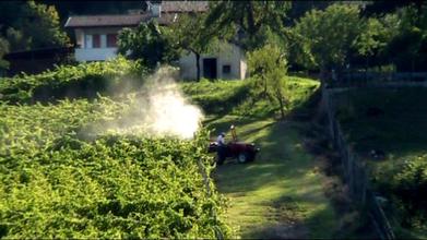 Sentenza storica. Diritto di non irrorazione (pesticida) | Ecologia Evolutiva | Scoop.it