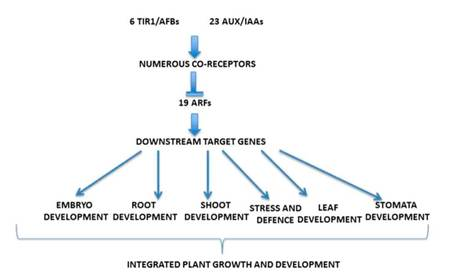 The Plant Cell Reviews Dynamic Aspects of Plant Hormone Signaling and Crosstalk | Plant nutrition & stress | Scoop.it