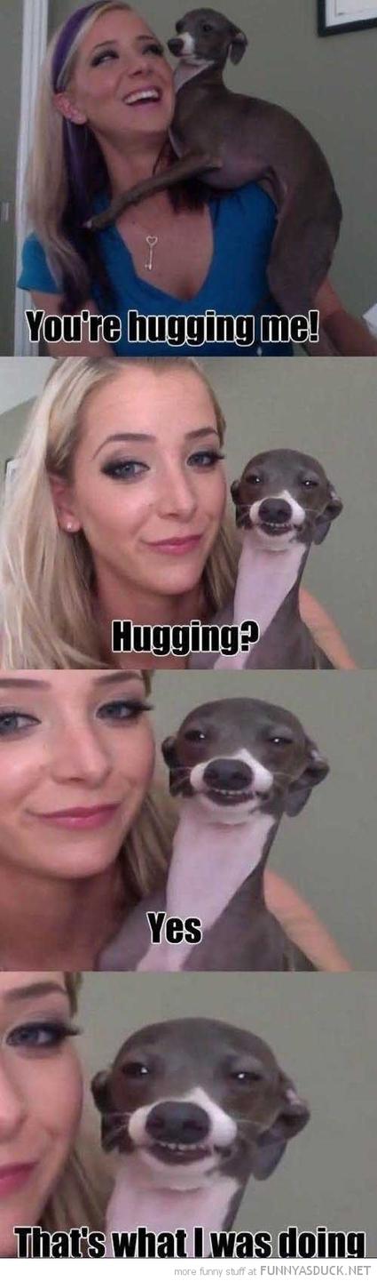 Pogo 18 | Funny Dog | Pogo18.com | Scoop.it