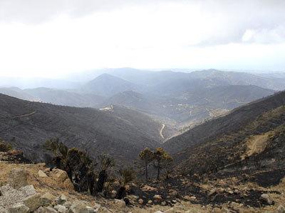 Controlado el fuego en Málaga tras quemar 7.175 hectáreas ... - Publico.es   Fp Agraria   Scoop.it