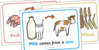 Where Does Food Come From Display Posters - food, display, posters, where does food come from, origin of food, cooking, cow, milk, pig, bacon | Technology: Plant and Animal Use | Scoop.it