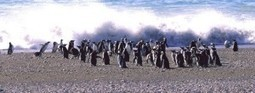 Patagonia | Mondo Trekking | Scoop.it