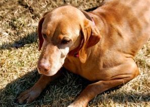 Do Pets Grieve the Death of Their Owners? | For The Love Of Pets | Scoop.it