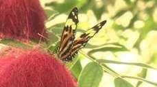 Rise in the number of Monarch butterflies migrating to Mexico - BBC News | OrganicNews | Scoop.it