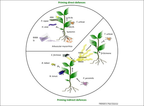 The 'prime-ome': towards a holistic approach to priming | Effectors and Plant Immunity | Scoop.it