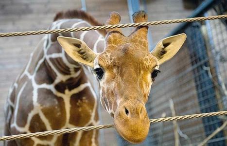 Analyse de la crise du Zoo de Copenhague | Be Marketing 3.0 | Scoop.it