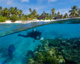 Excellent Idea of the Day: Umbrellas for Corals : Discovery News | All about water, the oceans, environmental issues | Scoop.it