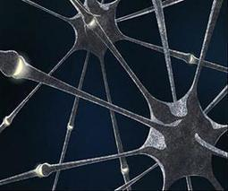Physicists build 'electronic synapses' for neural networks | The Asymptotic Leap | Scoop.it