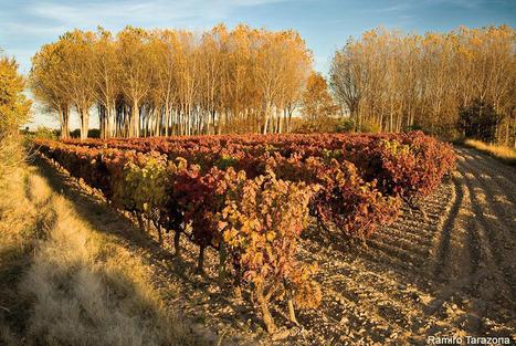 Portada - Rutas del vino de España | Enotourism Spain - enoturismo España | Scoop.it