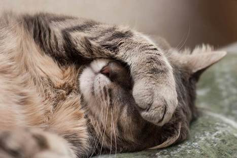 13 Health Symptoms Cat Owners Should Never Ignore   Whole Earth Pets   Scoop.it