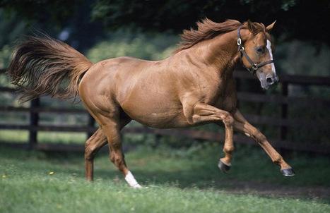 Web Design, Development, Marketing, SEO Consultancy for Equestrians, Equine, Horse Industry | Web Design & Development Company India | Scoop.it