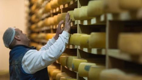 Coopératives, AOP et qualité: comment les producteurs de Comté font-ils face à la crise du lait? | The Voice of Cheese | Scoop.it