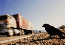 I was eager to know, do birds use something like roads? | onlinepetanswers | Scoop.it