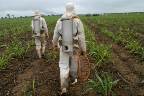 Pesticide makers walk fine line over public concerns - EurActiv | Plant protection | Scoop.it