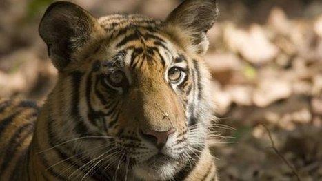 World wildlife populations 'plummet' | GarryRogers NatCon News | Scoop.it