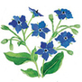 Borage: Blue Borage | Simply Grow Great Food | Scoop.it