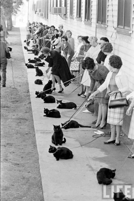 Black Cat Auditions In Hollywood, 1961   Vintage, Robots, Photos, Pub, Années 50   Scoop.it