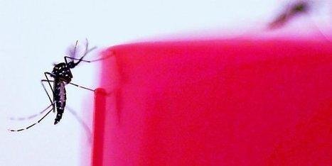 Montpellier : les chercheurs démunis face à des moustiques de plus en plus résistants   Toxique, soyons vigilant !   Scoop.it