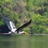 List of bird sanctuaries in India