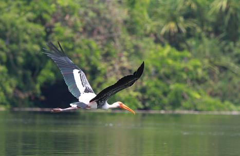Indian Bird Sanctuaries – A Paradise for Bird Watchers   List of bird sanctuaries in India   Scoop.it