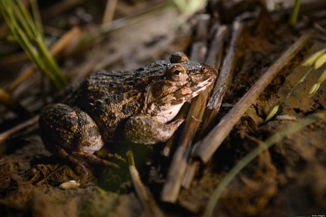 Frog-Phobic Man Awarded $1.6 Million After Flood Brings Frogs | Underground news | Scoop.it