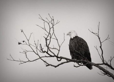 Soar Like Eagles | Ripples | Scoop.it