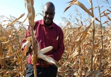 Water-efficient maize boosts harvests for drought-hit Tanzanian farmers | कृषी व्हिजन | Scoop.it