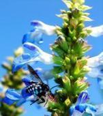 Böcek İlaçlama, Haşere İlaçlama, İlaçlama | Çeşitli Siteler | Scoop.it