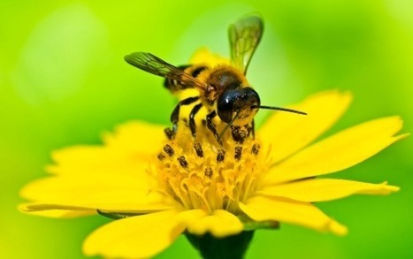 """Bee Pollen: 50/1000th of a Millimeter Particle is a Complete Superfood (""""go, save the bees"""") 