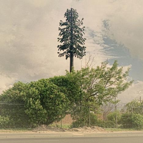 Cell Towers Dressed Like Trees... | Art for art's sake... | Scoop.it
