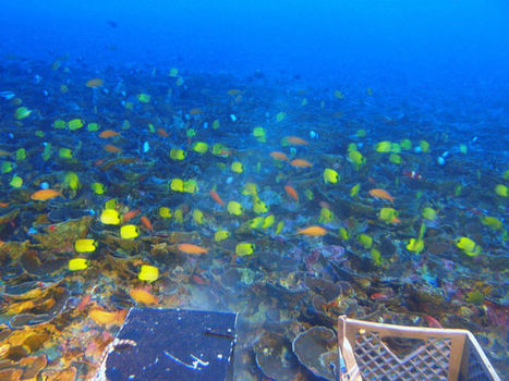 'Twilight Zone' Coral Reefs Revealed in Hawaii | All about water, the oceans, environmental issues | Scoop.it